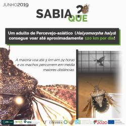 2019-06-15 - Sabia que - Halyomorpha halys